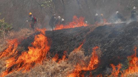 Intensivt släckningsarbete i Amazonas.   Bild: Juan Karita/AP/TT