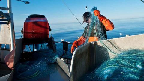 Enligt landsbygdsminister Jennie Nilsson planeras inga nationella åtgärder för Västerhavets fiskbestånd.  Foto: Yvonne Åsell / SvD / TT