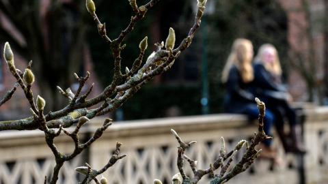 Forskarna Xlyan Xu och Genso Jia har funnit att tidigare lövsprickning och frodigare grönska leder till högre årsmedeltemperatur.   Bild: Johan Nilsson/TT