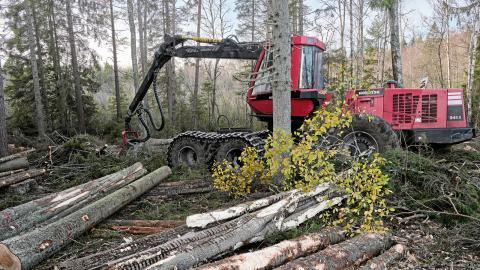 Hur mycket virke kan skogen producera och fortfarande vara en skog och inte en plantage?  Bild: Fotograferna Holmberg