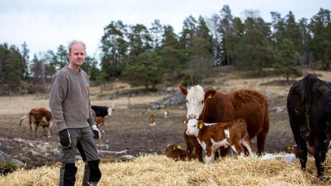 Håkan Carlborg anser att det är viktigt att bidra till biologisk mångfald. Ett sätt att göra det på är att låta djuren gå ute och förvalta det naturliga landskapet. Bild: Håkan Carlborg