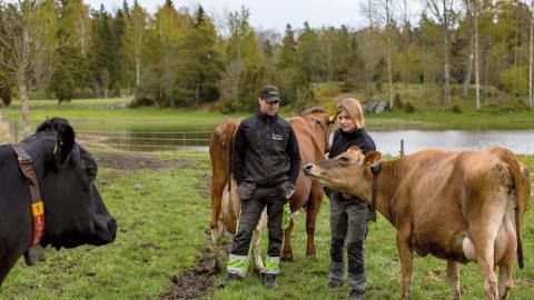 Annette och Jacob Gustawsons våtmark på Billinge gård är multifunktionell. Den fungerar som kolsänka och växtnäringsfälla, bidrar till ökad biologisk mångfald och fungerar som skydd mot översvämningar och vattenbuffert vid torrperioder.  Bild: Lotta Silfverbrand