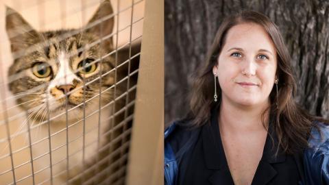 Obligatorisk märkning kan leda till  en minskning av hemlösa katter samt vara ekonomiskt fördelaktigt för flera parter, det menar bland andra Camilla Bergwall, förbundsordförande för Djurens rätt. Bild: Björn Larsson Rosvall/TT
