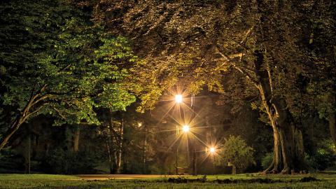 Ljusbaserade fällor för insekter förbjuds utomhus och starka utomhusstrålkastare ska under tio av årets månader inte få användas mellan skymning och soluppgång.  Bild: Shutterstock