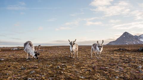 Redan med dagens växthuseffekt kommer tundran att fortsätta smälta de kommande 500 åren. När permafrosten tinar frigörs stora mängder metan och koldioxid som spär på uppvärmningen. Bild: Shutterstock