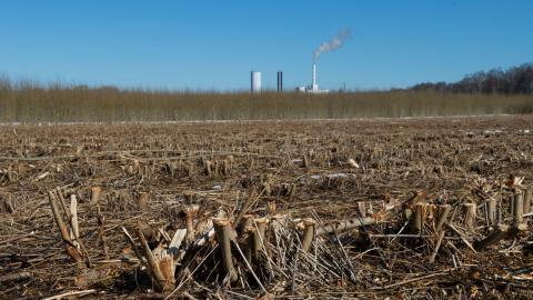 EU klassar nästan alla biobränslen som hållbara, trots att koldioxidutsläppen från biobränslen i många fall  är större än utsläppen från fossila bränslen. Bild: Fredrik Sandberg/TT