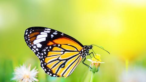 Målet är ett liv i harmoni med naturen till år 2050. Bild: Shutterstock