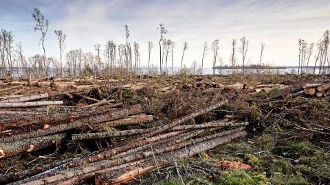 Skogsskövlingen som pågår både i Sverige och på andra håll i världen gör skogsbolagen till ett av de största hoten mot biologisk mångfald.  Bild: Henrik Holmberg/TT