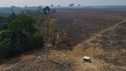 Två tredjedelar av världens ursprungliga regnskogar är borta eller har skadats svårt, enligt en kartläggning av norska Regnskogsfonden Bild: TT/AP