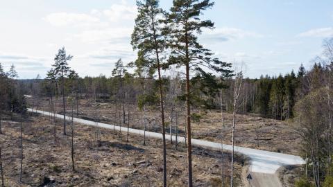 Allt fler forskare säger att hyggesfritt skogsbruk är bättre för biodiversiteten. Bild: Fredrik Sandberg/TT