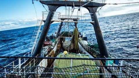 Bottentrålning förstör havsbotten, skapar enorma utsläpp och skadar havens ekosystem. Storskalig bottentrålning borde därför förbjudas, menar debattörerna. Bild: Shutterstock
