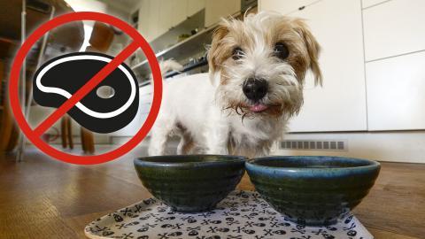 Djurägare i väst är oftare veganer och vegetarianer än andra. En del av dem låter husdjuren ta efter deras matvanor. Leif R Jansson/TT