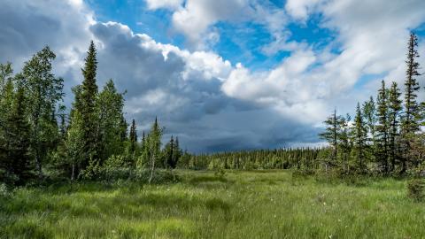 En mosaik av artrika skogar, våtmarker, vattendrag och fjäll finns i det värdefulla fjällskogsområdet i Vilhelmina kommun.  Foto: Jon Andersson