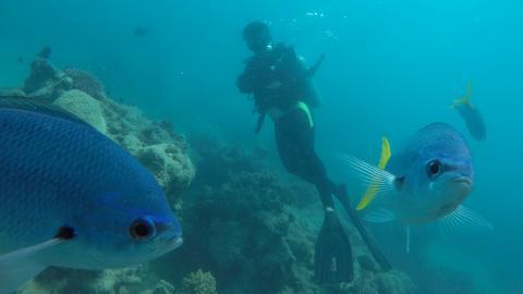 För några år sedan drabbades korallerna av en omfattande massblekning vid Stora Barriärrevet, enligt Världsnaturfonden WWF.  Bild: Gustav Sjöholm/TT