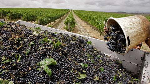 """""""För arbetarna, som är verksamma inom produktion av kaffe, ris, vin, te och skaldjur, råder inhumana och osäkra arbetsförhållanden"""", skriver debattören. Bild: AP"""