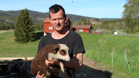Olov Östling har nyss sagt upp sin  anställning som slöjdlärare för att kunna satsa helhjärtat på Forsa Fjälljordbruk.  Bild: Lena Frändberg